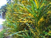Λουλούδι από το ismi Στοκ φωτογραφία με δικαίωμα ελεύθερης χρήσης