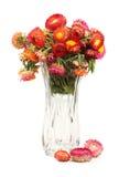 Λουλούδι αχύρου Στοκ Φωτογραφίες
