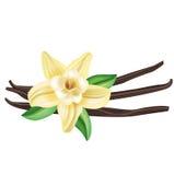 Λουλούδι βανίλιας τα ραβδιά και τα φύλλα που απομονώνονται με Στοκ Φωτογραφία