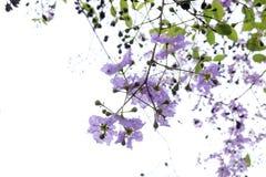 Λουλούδι βασίλισσας στο δέντρο Στοκ φωτογραφία με δικαίωμα ελεύθερης χρήσης