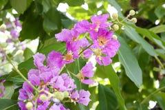 Λουλούδι βασίλισσας Στοκ Εικόνες