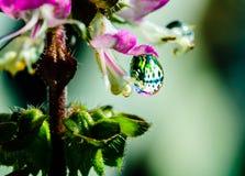 Λουλούδι βασιλικού στοκ εικόνες