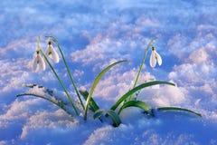 Λουλούδι βαλεντίνων ` s Αγίου Στοκ φωτογραφία με δικαίωμα ελεύθερης χρήσης
