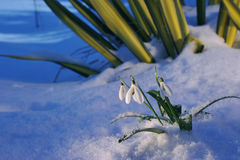 Λουλούδι βαλεντίνων ` s Αγίου Στοκ Φωτογραφία