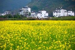 Λουλούδι βιασμών σε Yangshuo, Guilin, Κίνα Στοκ φωτογραφίες με δικαίωμα ελεύθερης χρήσης