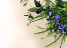 Λουλούδι βιγκών με τη χλόη Στοκ φωτογραφία με δικαίωμα ελεύθερης χρήσης