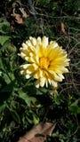 Λουλούδι βοτανικής Στοκ Φωτογραφία