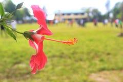 Λουλούδι για σας Στοκ φωτογραφίες με δικαίωμα ελεύθερης χρήσης