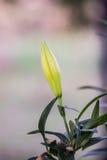 Λουλούδι για το σας Στοκ Φωτογραφία
