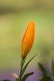 Λουλούδι για το σας Στοκ εικόνα με δικαίωμα ελεύθερης χρήσης