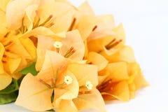 Λουλούδι εγγράφου Στοκ φωτογραφίες με δικαίωμα ελεύθερης χρήσης