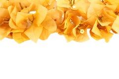 Λουλούδι εγγράφου Στοκ Εικόνα