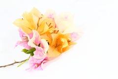 Λουλούδι εγγράφου Στοκ Φωτογραφίες