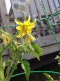 Λουλούδι εγκαταστάσεων Στοκ εικόνες με δικαίωμα ελεύθερης χρήσης