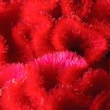 ` Λουλούδι ` εγκεφάλου Στοκ Εικόνα