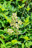 Λουλούδι ζιζανίων Στοκ εικόνα με δικαίωμα ελεύθερης χρήσης