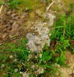 Λουλούδι ζουγκλών στοκ εικόνες
