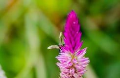 Λουλούδι & ζωύφιο Στοκ Εικόνα