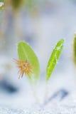 Λουλούδι θάλασσας και anemone θάλασσας Στοκ Εικόνες