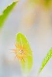 Λουλούδι θάλασσας και anemone θάλασσας Στοκ φωτογραφίες με δικαίωμα ελεύθερης χρήσης