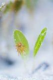 Λουλούδι θάλασσας και anemone θάλασσας Στοκ εικόνες με δικαίωμα ελεύθερης χρήσης