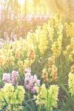 Λουλούδι θερινών ορχιδεών στο δάσος Στοκ Φωτογραφία