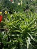 Λουλούδι κήπων Στοκ φωτογραφία με δικαίωμα ελεύθερης χρήσης