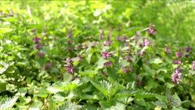 Λουλούδι κίνησης πράσινων εγκαταστάσεων απόθεμα βίντεο