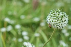 Λουλούδι και έντομο στοκ φωτογραφία με δικαίωμα ελεύθερης χρήσης