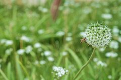 Λουλούδι και έντομο Στοκ εικόνες με δικαίωμα ελεύθερης χρήσης