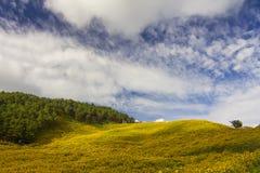 Λουλούδι και βουνά Στοκ εικόνες με δικαίωμα ελεύθερης χρήσης