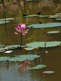 Λουλούδι και εγκαταστάσεις Lotus Στοκ φωτογραφίες με δικαίωμα ελεύθερης χρήσης