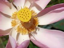 Λουλούδι και εγκαταστάσεις Lotus Στοκ φωτογραφία με δικαίωμα ελεύθερης χρήσης
