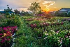 Λουλούδι και ηλιοβασίλεμα Στοκ Εικόνα