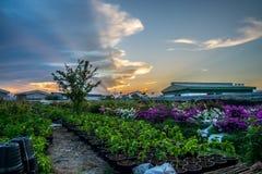 Λουλούδι και ηλιοβασίλεμα Στοκ Εικόνες