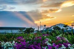 Λουλούδι και ηλιοβασίλεμα Στοκ Φωτογραφία