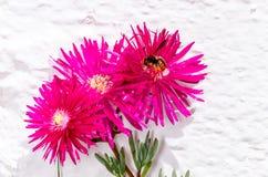 Λουλούδι και μέλισσα άνοιξη που πετούν να προμηθεύσει με ζωοτροφές Στοκ Εικόνες