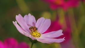 Λουλούδι και μέλισσα απόθεμα βίντεο