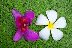 Λουλούδι και ορχιδέα Plumeria Στοκ φωτογραφία με δικαίωμα ελεύθερης χρήσης