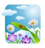 Λουλούδι και ουρανός εποχής άνοιξης Στοκ φωτογραφίες με δικαίωμα ελεύθερης χρήσης