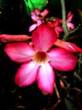 Λουλούδι και λουλούδια Στοκ Φωτογραφία
