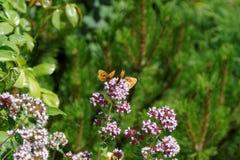 Λουλούδι και πεταλούδα στοκ εικόνα με δικαίωμα ελεύθερης χρήσης