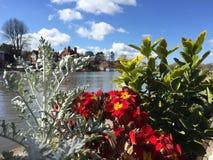Λουλούδι και ποταμός του Τάμεση Στοκ φωτογραφίες με δικαίωμα ελεύθερης χρήσης