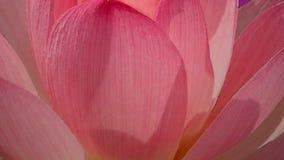 Λουλούδι και σεληνόφωτο κρίνων - τρισδιάστατα δώστε απόθεμα βίντεο