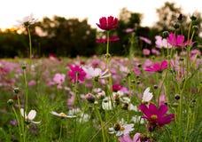 Λουλούδι και σκοτεινό ηλιοβασίλεμα Στοκ Φωτογραφίες