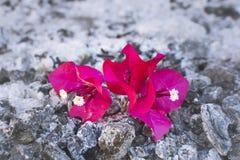 Λουλούδι και τέφρα Στοκ φωτογραφία με δικαίωμα ελεύθερης χρήσης