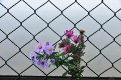 Λουλούδι και υπόβαθρο φρακτών καλωδίων Στοκ φωτογραφία με δικαίωμα ελεύθερης χρήσης