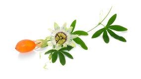Λουλούδι και φρούτα Passionflower στοκ εικόνα