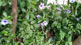 Λουλούδι και φυτό Στοκ Φωτογραφίες