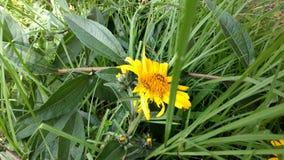 Λουλούδι και φύλλα Στοκ φωτογραφία με δικαίωμα ελεύθερης χρήσης